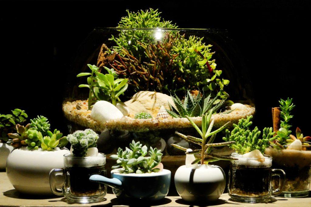 photophore avec plantes grasses